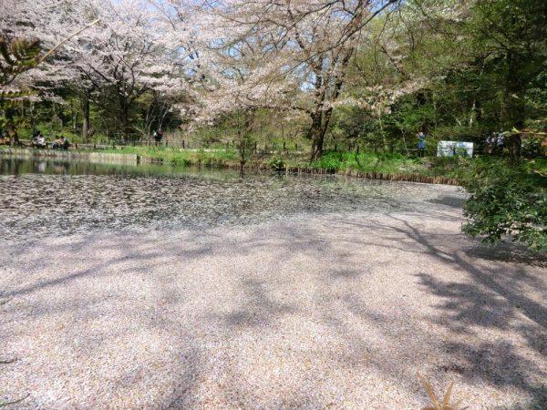 白金台 自然教育園 水生植物園