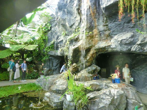 新宿御苑 温室 植物園